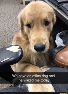 Good thing we don't have an office dog, I'd get nothing done and the dog would go missing  ;)