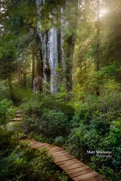 Fine Art Gallery - Matt Shannon Photography Fine Art Gallery, Country Roads, Photo And Video, Nature, Plants, Forests, Photography, Woods, Instagram
