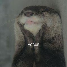 VOGUE (cute,madonna,vogue,otter,animals,lol,hilarious,meme)