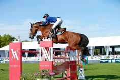 Showjumping bay horse