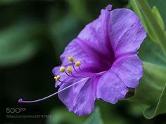 Reaching ... (Bill Cowles / Salt Lake City / United States) #E-M5MarkII #macro #photo #insect #nature