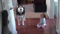 Little Kid And Dog Have A Conversation