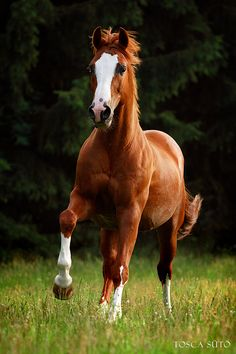 Moms family horse Gondor, gelding, 7 years old