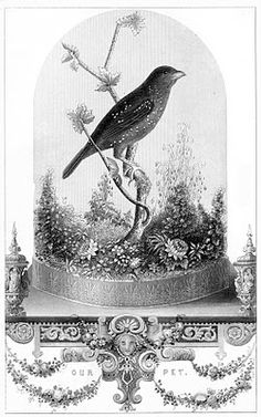 Vintage Printable - Breathtakingly Beautiful Bird in Cloche - The Graphics Fairy