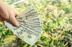 Going Green, Not All Marijuana Business Models Are Equal