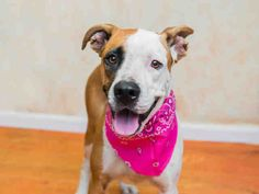 Adoptable Dog: Wax #pets #animals #adoption #rescue #dog