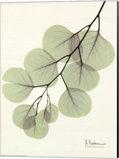 X ray flower art - Cascading Eucalyptus Fine-Art Print by Albert Koetsier at ArtPrintsforHomeDecor.com