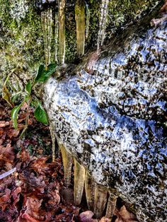 naturensdronning: Glitreland