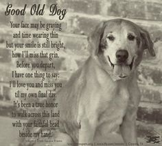 Good Old Dog. <3 i want brooklyn to live forever...please