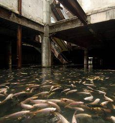 Un centre commercial abandonné envahi de poissons !