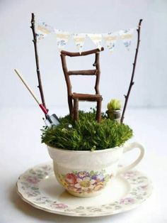 Tea cup planting