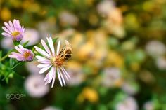Flowers and Bees - Flowers and Bees