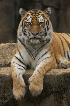 one of the most beautiful animals by ucumari, via Flickr
