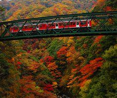 . Hakone Tozan Train Line (Hakone, Kanagawa Prefecture)