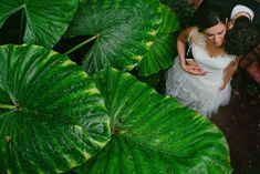 I'd imagine my wedding as a fairy tale. huge, beautiful and white. Photography Contests, Photography Tutorials, Wedding Couples, Wedding Photos, Best Wedding Photographers, Fall 2016, Decir No, Plant Leaves, Spain