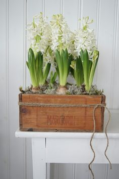 Ways to Re-Use Wooden Crates Wooden Crate Planters OR cigar box ideas.Wooden Crate Planters OR cigar box ideas. to Re-Use Wooden Crates Wooden Crate Planters OR cigar box ideas.Wooden Crate Planters OR ciga Wooden Crates Planters, Old Wooden Crates, Garden Bulbs, Spring Bulbs, Deco Floral, Bulb Flowers, Plantation, Spring Flowers, Fresh Flowers