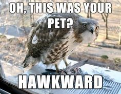 Funny puns are always hilarious. But these funny animal puns will certainly make it to the liked list of puns you possess. These might be a set of silly puns but they were equally good puns as well and will thus be liked by all. Funny Animal Photos, Funny Animal Memes, Funny Animals, Funny Pictures, Cute Animals, Funny Memes, Funny Pics, Animal Funnies, Silly Jokes