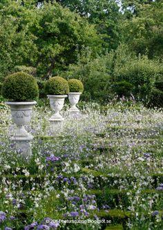 Natural Blog Ting Garden