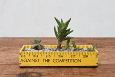 Yellow Succulent Ruler Planter Box Kit by whiskyginger on Etsy, $24.00