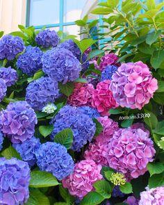 Lilacs, Hydrangeas, Hygge, Flower Crown, Cute Drawings, Beautiful Flowers, Planters, Home And Garden, Bouquet