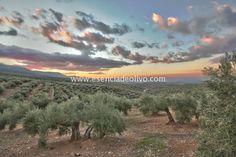 Olivares de Sierra Mágina en la Provincia de Jaén