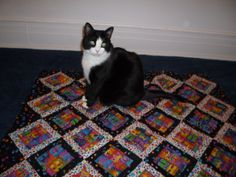 Panzi On A Quilt Also note the cat is  on a quilt with cats on the quilt.
