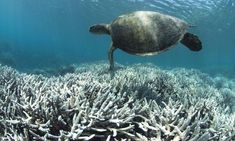"""The Great Barrier Reef and the Real Danger to the World's Oceans  -  """"This is a global disaster that threatens our world and the reefs' decline is its most alarming symptom. This is not something that may happen in the future. It is here now. Right now. We are living in its midst. This is not global warming, this is pollution caused by irresponsible and out-of-control governments and corporations – and it's time to hold them accountable."""""""