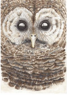 Owl sketch by Victoria Rimbos