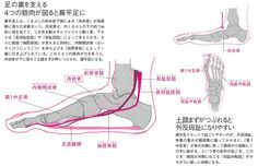 足裏の筋肉を鍛えて扁平足、外反母趾を解消 ゆがみリセット学(11)|ヘルスUP|NIKKEI STYLE