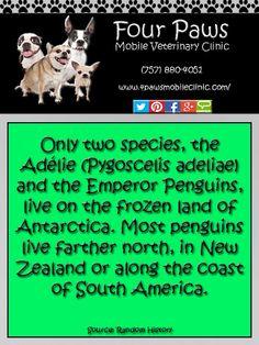 Penguin Fact Penguin Facts, Penguin Species, Gentoo Penguin, Emperor Penguin, Yellow Cat, Trivia, Penguins, History, Species Of Penguins