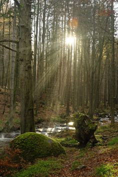 #‎Sunrays‬ in the ‪#‎wood‬ (Harz Deutschland) by Tim Lee on 500px