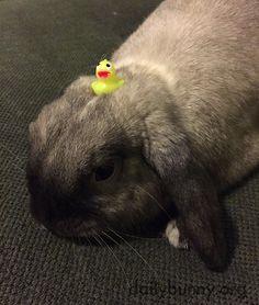 Bunny has a tiny toy on his head - April 1, 2016
