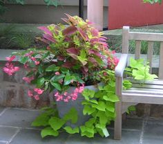 Free Container Garden Plans   Wednesdays at Winterthur: Planning Scrumptious Summer Containers