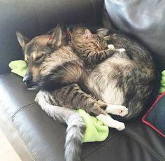 Casal Deixa Seu Cão Escolher Um Gatinho No Abrigo E Agora Eles São Melhores Amigos