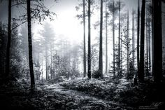 """Would you go to this Southern Finnish forest? Multiwinner #photography """"#Misty #Forest"""" from #Salo #Finland"""