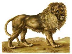 http://thegraphicsfairy.com/wp-content/uploads/2012/09/Lion-Vintage-GraphicsFairy1.jpg