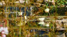 Je crée mon bassin naturel  Aujourd'hui, la tendance est au retour à la nature. Et les jardins connaissent un succès grandissant, chacun voulant son petit bout de pré vert. Vous rêvez d'un bassin naturel. Idées et conseils.