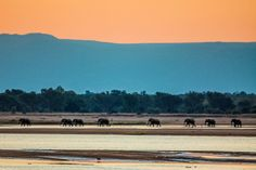 Africa - study in horizontals!