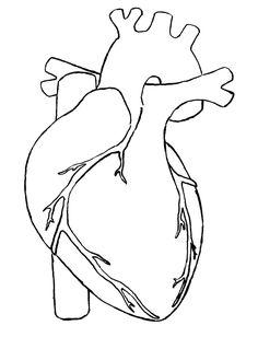 anatomical heart pattern - Google Search