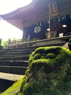英彦山豊前坊高住神社へ行って来ました 苔むした参道を上がると大きな岩山に寄り添うように建つお社 夏越祭の翌日とあって茅の輪も残っていました苔むした長い参道を上がると迎えてくれるユニークな顔の狛犬たち  tags[福岡県] Fukuoka