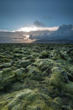 """green carpet - Iceland is known for its big endless mossy lava fields and sometimes when driving you are totally like located on another planet. This big beautiful mossy green lavafield is on the south coast of Iceland and is called Eldhraun (""""fire-lava""""). The Eldhraun lava field has a thickness of about 12 meters and is completely overgrown with moss. The lava ended up in Eldhraun during the 1783 eruption of Laki."""