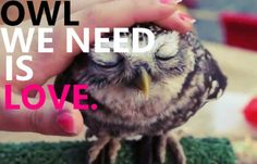 cute owl pictures   cute, love, owl, photography, quote - image #353019 on Favim.com