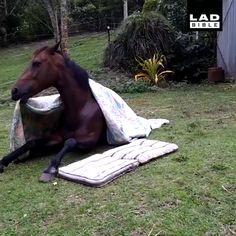 Cute Animal Photos, Cute Animal Videos, Funny Animal Pictures, Funny Horses, Funny Dogs, Cute Dogs, Happy Animals, Animals And Pets, Wild Animals