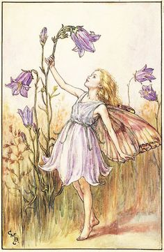 "Vintage print 'The Harebell Fairy' by Cicely Mary Barker from ""The Book of the Flower Fairies""; Poem and Pictures by Cicely Mary Barker, Published by Blackie & Son Limited, London [Flower Fairies - Summer] Cicely Mary Barker, Illustration Art Nouveau, Fantasy Illustration, Flower Fairies, Fairy Pictures, Vintage Fairies, Beautiful Fairies, Fairy Art, Faeries"