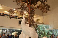 #Travel #tour #Darwin #Museum (12)