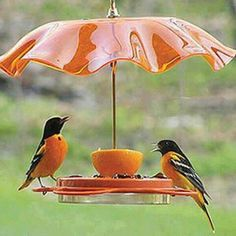 Oriole Feeder....they are attracted to the color orange & will eat oranges if you put some out.  Also they love grape jelly and even hummingbird nectar mixes!