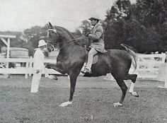 Moreland's Maid - WGC 3G in 1937 and a great broodmare