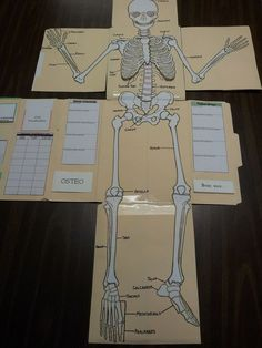 , The Skeletal System for Apologia's Exploring Creation with Human Anatomy and Physiology.: