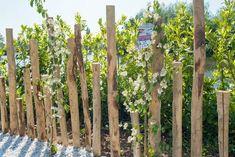 Met een palenwand in je tuin breek je het zicht. Je kunt er dus voor kiezen de palenwand in plaats van een schutting of tuinhek te plaatsen, maar waarom niet gewoon in je tuin naast het terras.  Met wit grind op de grond en met een leuke klimplant tegen de palen aan, creëer je een heel leuk plekje in je tuin.  Wij gebruikten kastanjehouten geschilde palen. Deze zien er lekker robuust uit, ga je liever voor recht-toe-recht-aan? Kies dan geïmpregneerde schommelpalen. #tuin #tuininspiratie