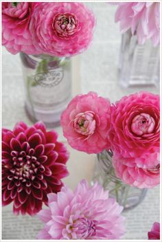 dahlia loveliness...perfect shade for spring + summer or a black + white winter soiree that needs a pop